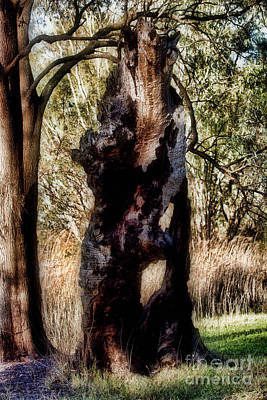 Photograph - Death Of A Tree V12 by Douglas Barnard