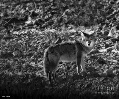 Photograph - Death Valley  Coyote by Blake Richards