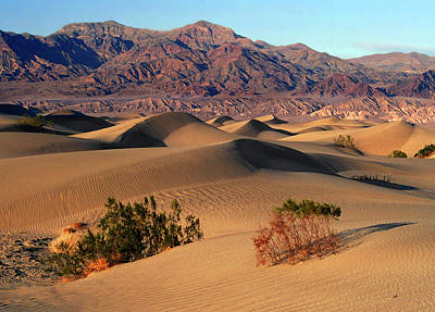 Photograph - Death Valley Dunes by Tom Kidd