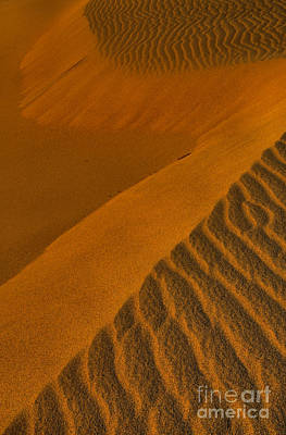 Photograph - Death Valley Golden Dunes by Adam Jewell