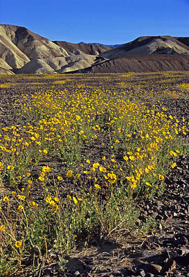 Photograph - Death Valley Spring by Doug Davidson