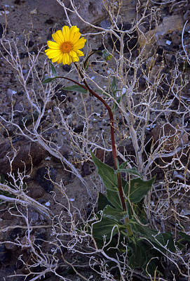 Photograph - Death Valley Spring Growth by Doug Davidson