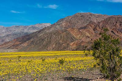 Death Valley Super Bloom Art Print by Paul Freidlund