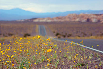 Photograph - Death Valley Superbloom 101 by Daniel Woodrum