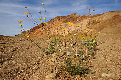 Photograph - Death Valley Superbloom 202 by Daniel Woodrum