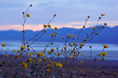 Photograph - Death Valley Superbloom 304 by Daniel Woodrum