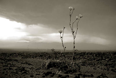 Photograph - Death Valley Superbloom 307 by Daniel Woodrum