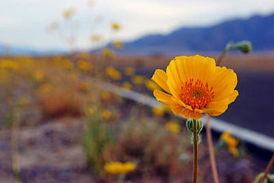 Photograph - Death Valley Superbloom 400 by Daniel Woodrum