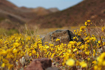 Photograph - Death Valley Superbloom 408 by Daniel Woodrum