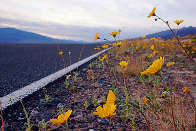 Photograph - Death Valley Superbloom 500 by Daniel Woodrum