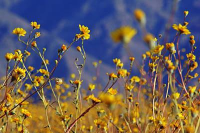 Farm Life Paintings Rob Moline - Death Valley Superbloom 505 by Daniel Woodrum