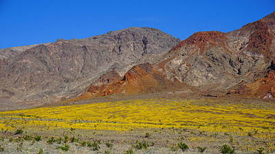 Photograph - Death Valley Superbloom by Tranquil Light Photography