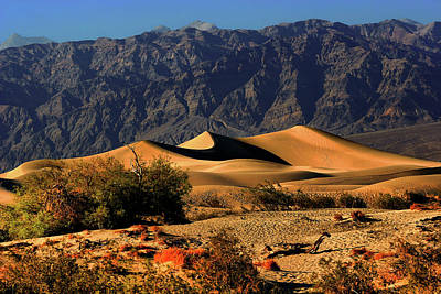 Isolated Photograph - Death Valley's Mesquite Flat Sand Dunes by Christine Till