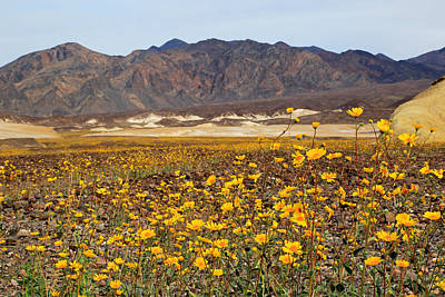 Photograph - Death Valleys Rare Super Bloom by Donna Kennedy