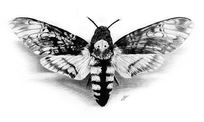 Drawing - Deathhead Hawk-moth by Christian Klute