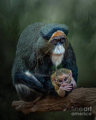 Photograph - Debrazza's Monkey And Baby by Brian Tarr