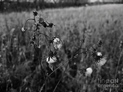 Photograph - Decadence by Cendrine Marrouat