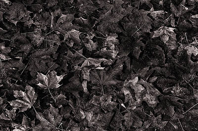 Photograph - Decayed Autumn Leaves On The Ground Copper Tone by Ricardo Dominguez