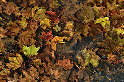 Photograph - Decayed Autumn Leaves On The Ground by Ricardo Dominguez