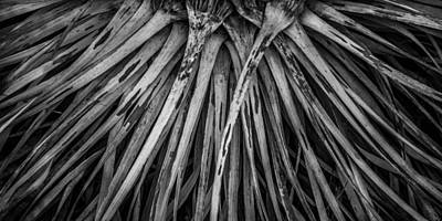 Photograph - Decaying Chaparral Yucca by Alexander Kunz