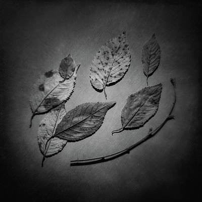 Decaying Leaves Art Print