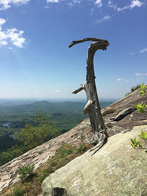 Photograph - Decaying Tree At The Top Of Table Rock Trail South Carolina by Kelly Hazel