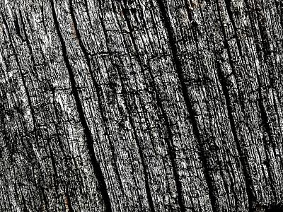 Photograph - Decaying Wood by Colin Drysdale