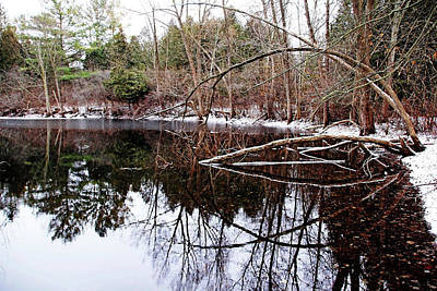 Photograph - December At The Pond by Debbie Oppermann