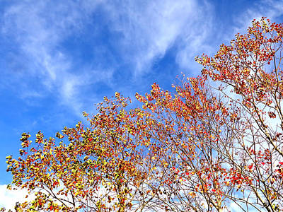 Photograph - December Leaves by Kathy K McClellan