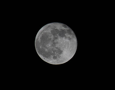 Photograph - December Moon by Donna L Munro
