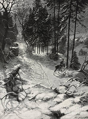Deer Drawing - December Night Snow Covered Wood by Richard Bong