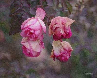December Rose #263 Art Print