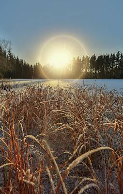 Photograph - December Sun by Rose-Marie Karlsen