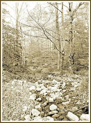 Photograph - Deciduous Forest In Autumn, Pocono Mountains, Pennsylvania by A Gurmankin