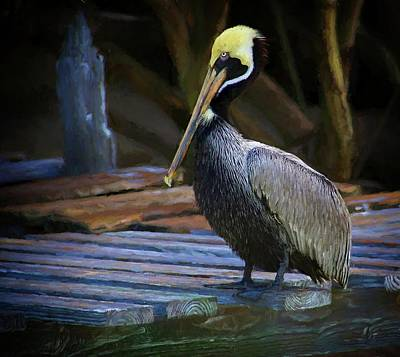 Photograph - Deck Pelican by Alice Gipson