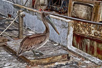 Photograph - Deckhand by Ken Williams