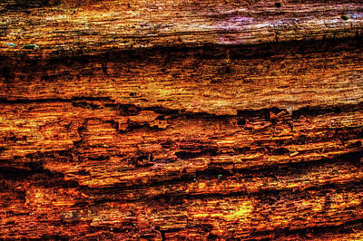 Photograph - Decomposing Fallen Tree Trunk Detail by Roger Passman