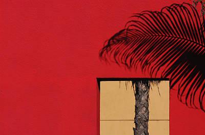 Photograph - Deconstructed Palm Tree by Stuart Allen