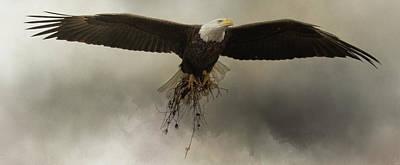 Photograph - Decor For The Nest Bald Eagle Art by Jai Johnson