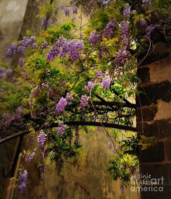 Photograph - Decorated Trellis by Lainie Wrightson