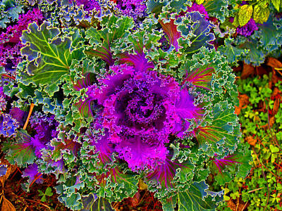 Photograph - Decorative Cabbage by James Granberry