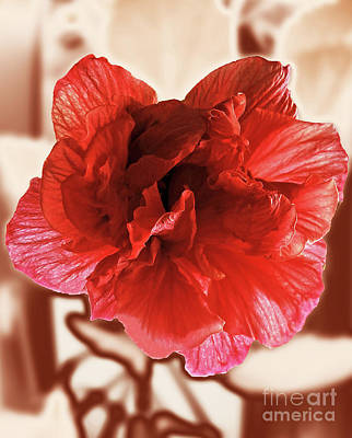 Digital Art - Decorative Hibiscus by Jasna Dragun