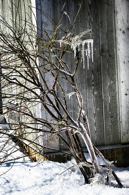 Photograph - Decorative Ice Formation by Tatiana Travelways