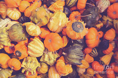 Photograph - Decorative Squash And Gourds by Edward Fielding
