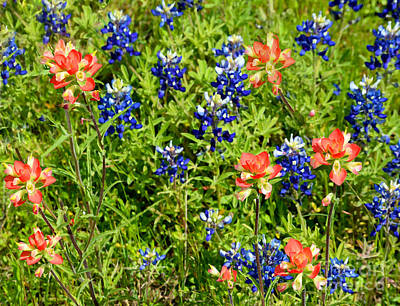 Photograph - Decorative Texas Bluebonnets Meadow Digital Photo G33117 by Mas Art Studio