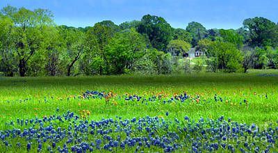 Mixed Media - Decorative Texas Homestead Bluebonnets Meadow Mixed Media Photo H32517 by Mas Art Studio