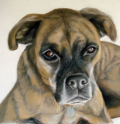 Drawing - Deefer The Boxer by Mary Mayes