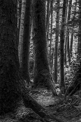 Photograph - Deep Dark Forest II by Jon Glaser