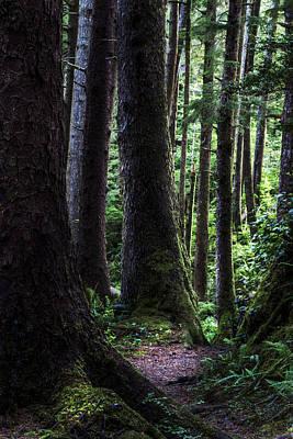 Photograph - Deep Dark Forest by Jon Glaser