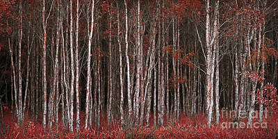 Photograph - Deep Forest 2 by Russ Brown